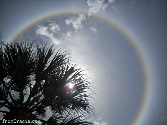 Sun Halo | ring around the sun