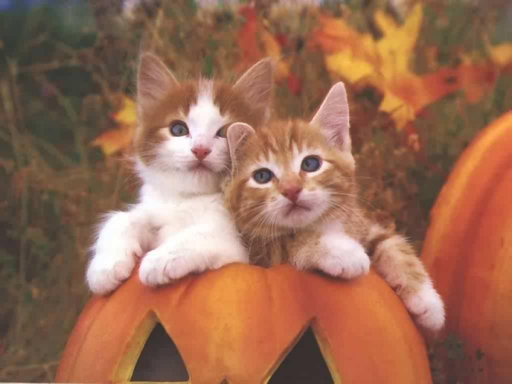 http://1.bp.blogspot.com/-23oNNkAp-QQ/UDcWly2D6gI/AAAAAAAACxA/sYKj9k3BX98/s1600/beautiful-cat-wallpaper.jpg