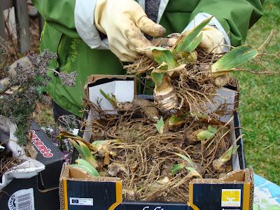 troc aux plantes- échange de graines