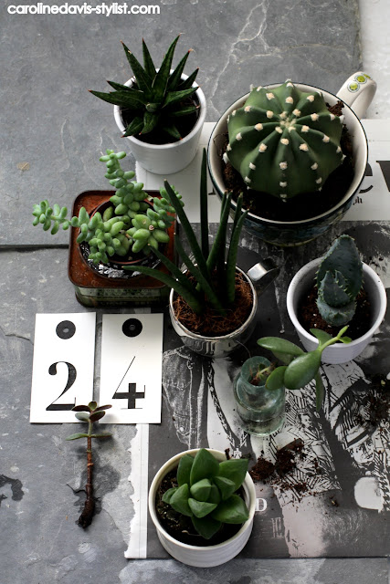 styling details_advent calendar day 24_carolinedavis-stylist.com_trend-daily blog_cactus_succulents