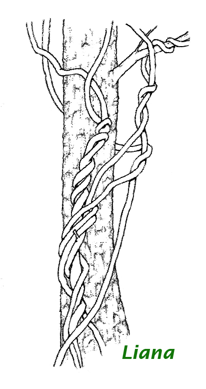 Pz c dibujos de plantas for Plantas ornamentales para colorear