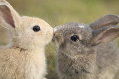 Bunny Luv