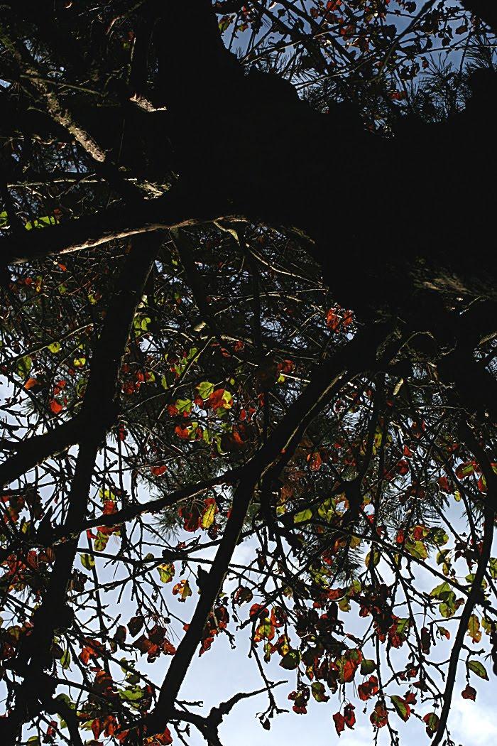wildwuchs unter aufsicht nachbars kiefer ber unserem apfelbaum. Black Bedroom Furniture Sets. Home Design Ideas