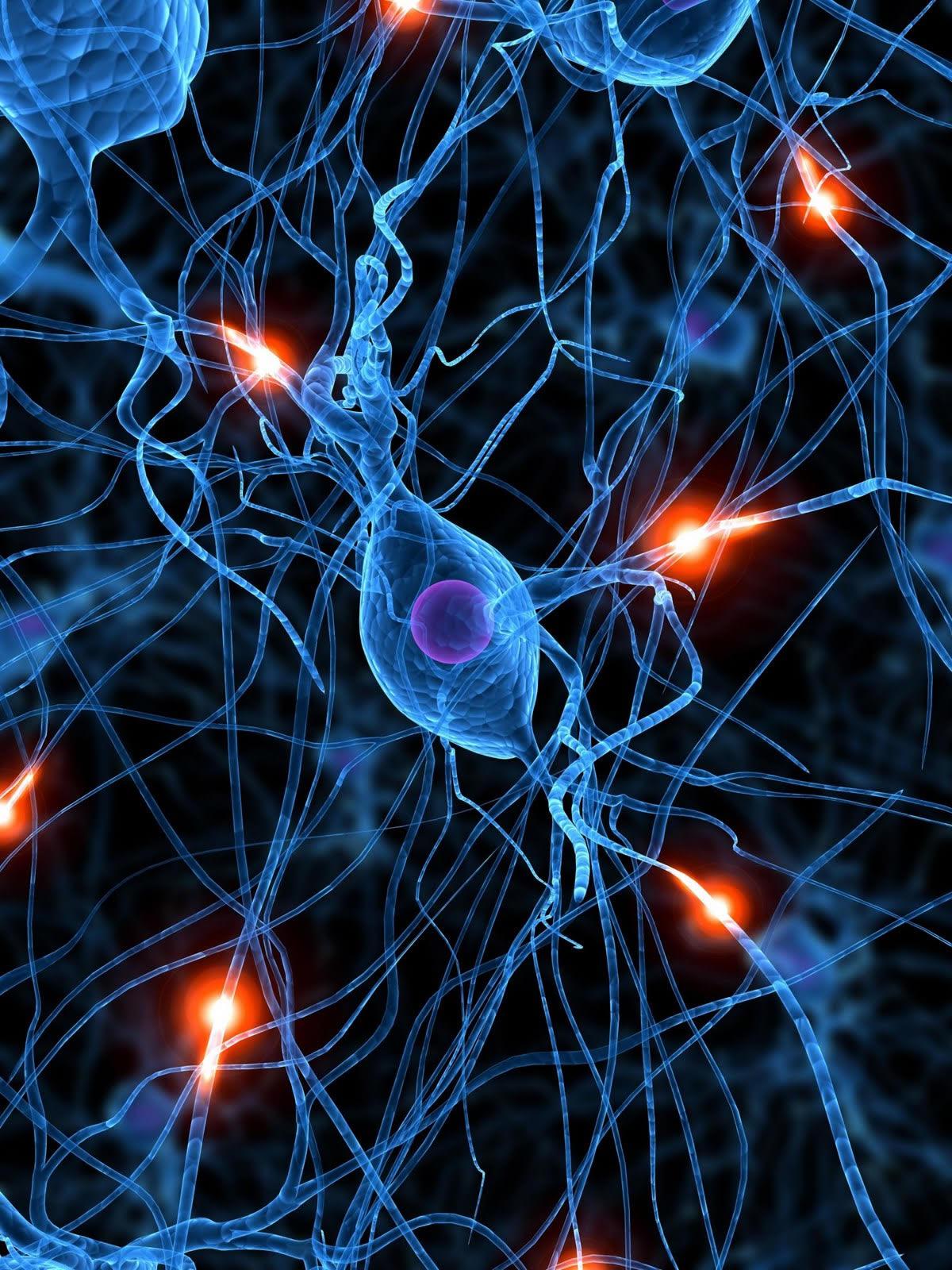 Resultado de imagen de El cerebro conexiones sin fin