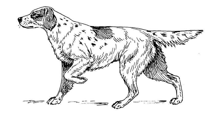 Perro de caza para imprimir