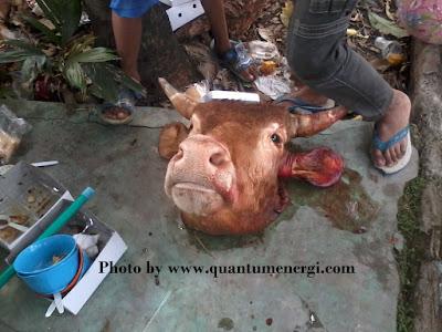 idul adha dan hewan kurban