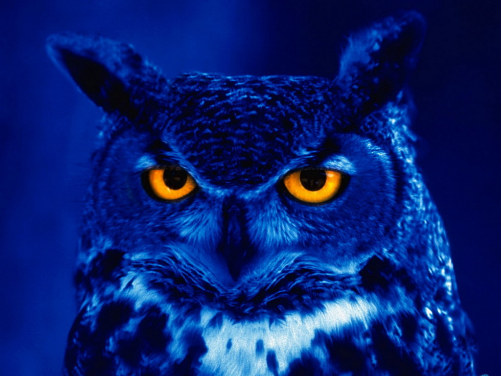 wallpapers owl