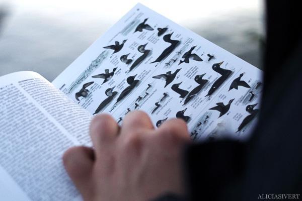 aliciasivert, alicia sivertsson, alicia sivert, andreas, fågelskåda, fågelskådning, promenad, walk, water, birds, bird, fågel, kikare