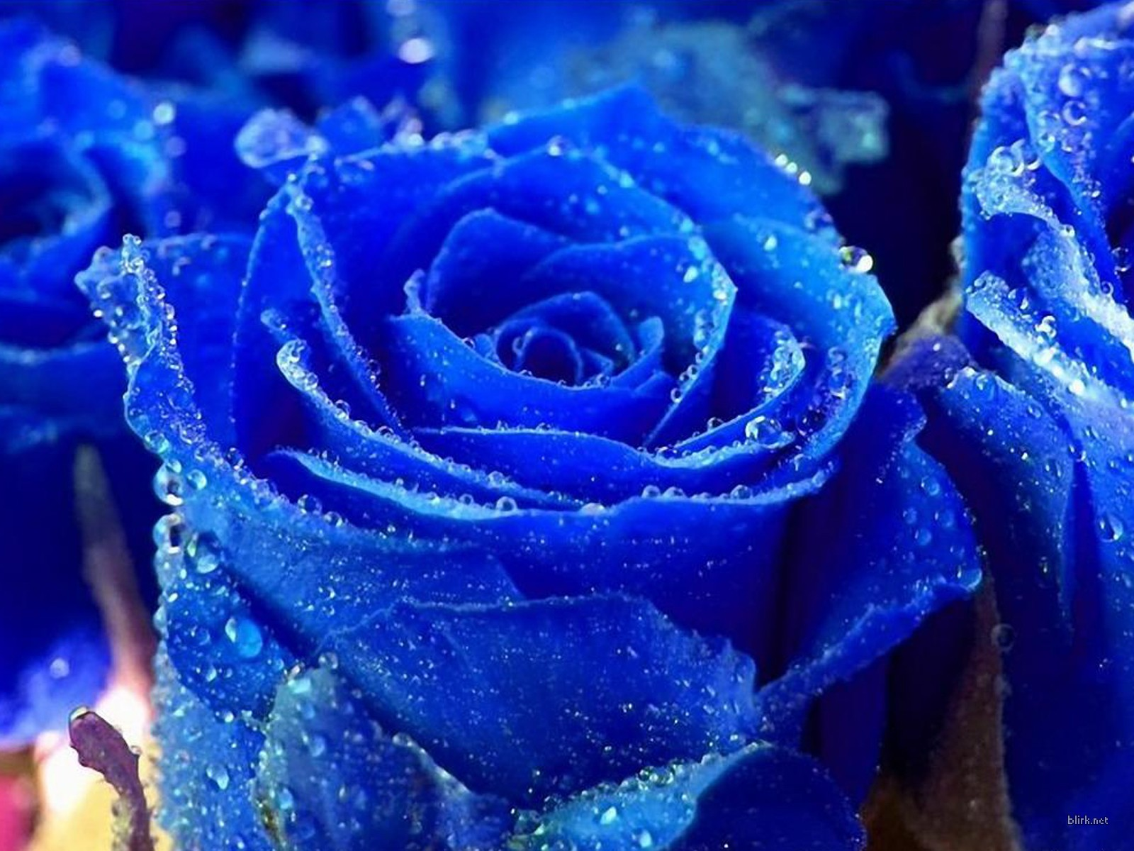 moons flower: blue flower wallpaper
