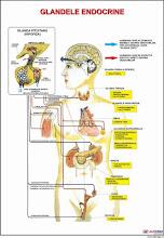 Organele si Sistemele corpului 2