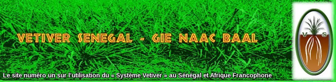 Vetiver Senegal