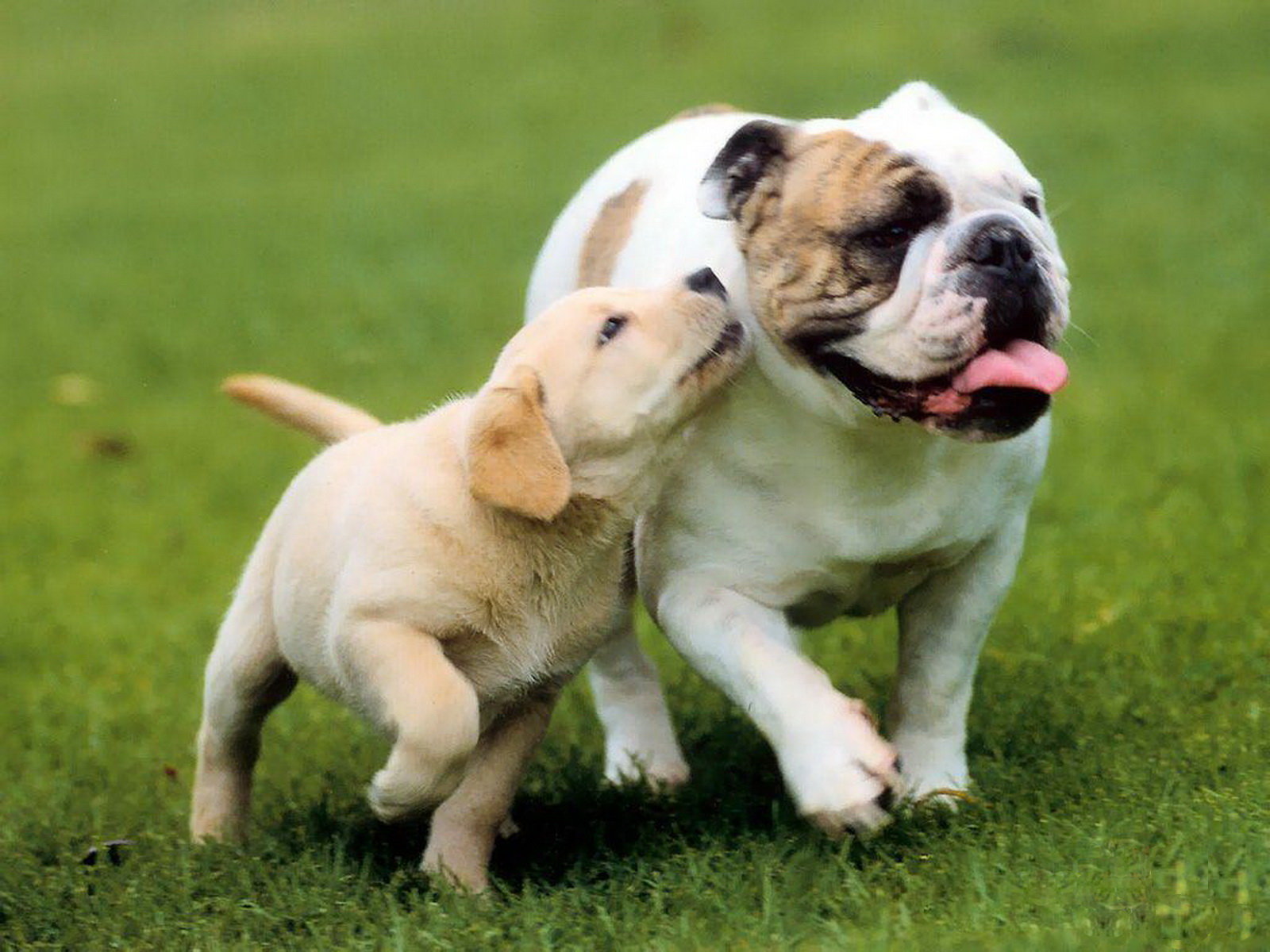 http://1.bp.blogspot.com/-268Ov-zq6XU/Tyw8Sls1G6I/AAAAAAAAA2c/vX5T84PjtdQ/s1600/15-Cute+Dog+1600x1200.jpg