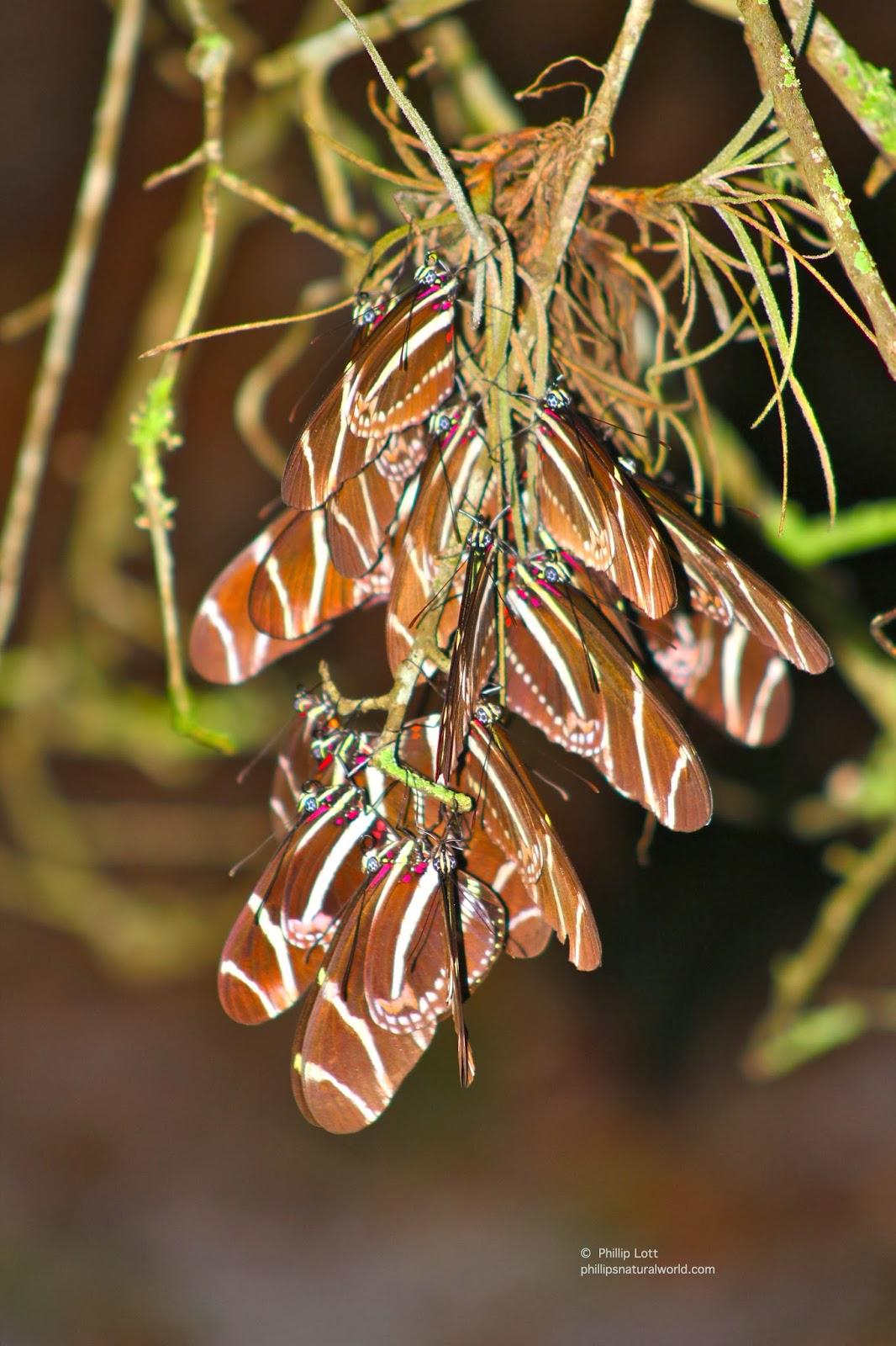 bears and butterflies phillip u0027s natural world