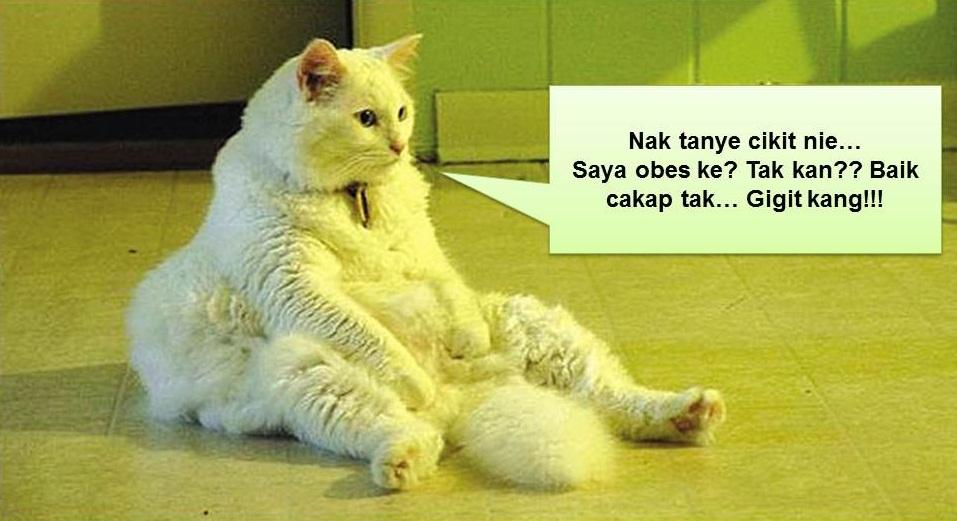 gambar kucing lawak giler