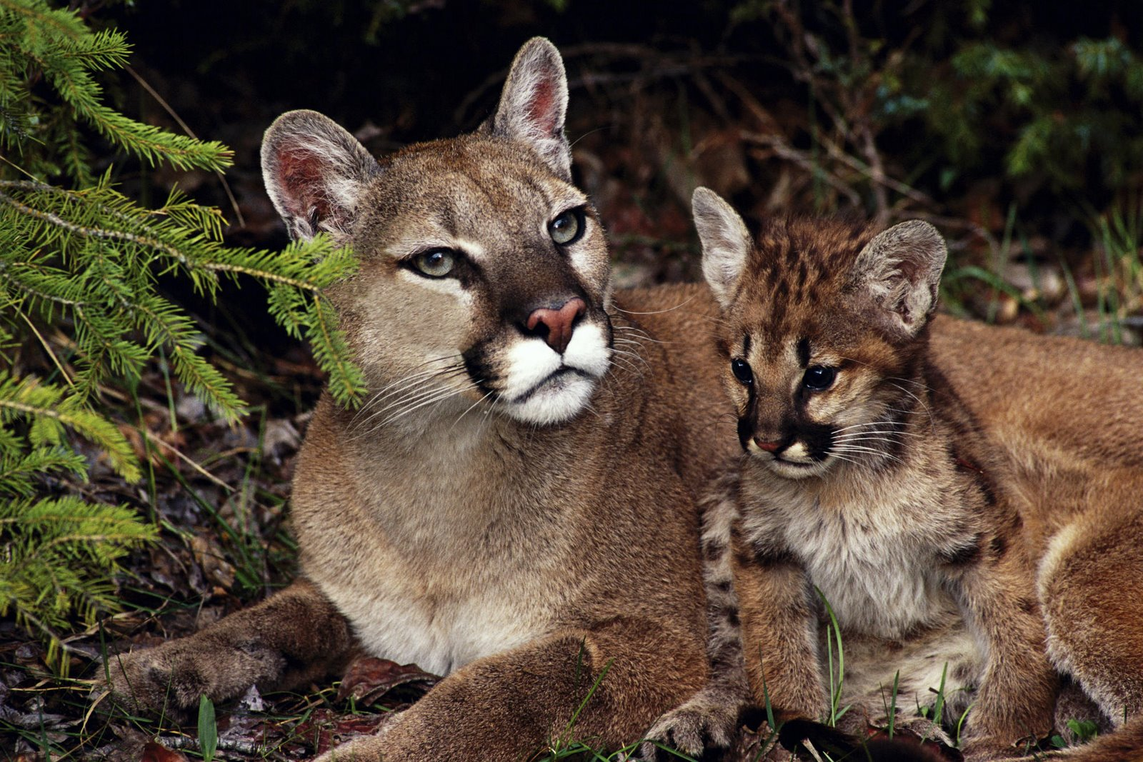 Welcome To Animal Cognizance Mother And Baby Animal