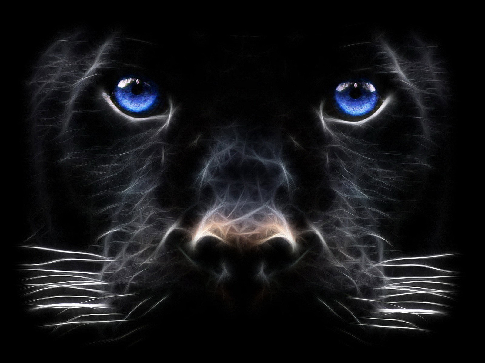 cat digital art hd wallpaper resolotion 1 600px 1 200px tags black cat