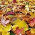 L'automne.Poezii in limba franceza despre toamna