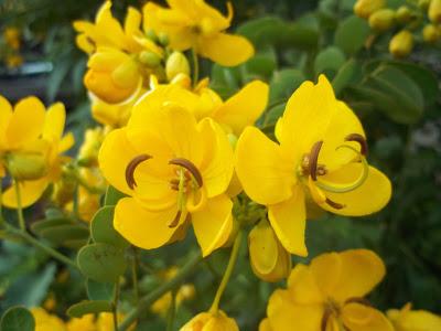 Flowering Trees – I – Karthik's Journal