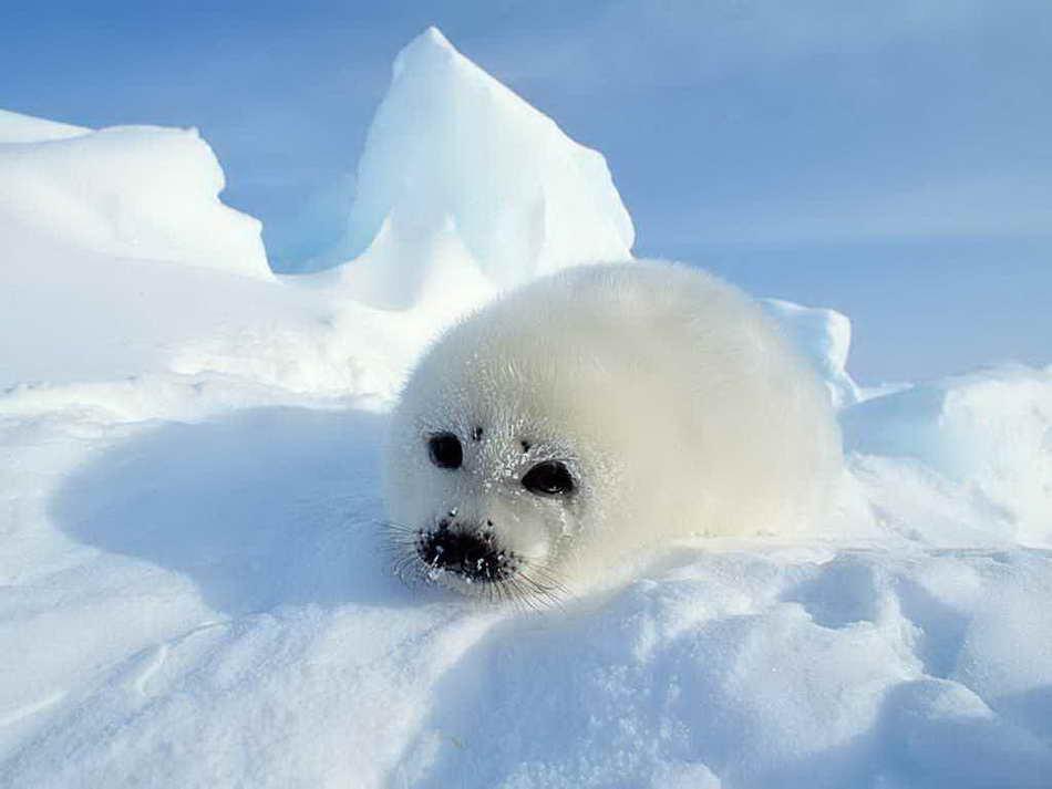 animals-in-the-snow-01.jpg