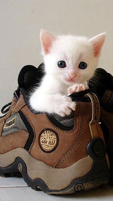 Sweet Kitten Gallery - Funny Animal