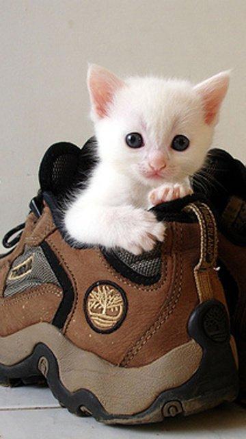 Sweet Kitten Gallery - Funny Animal