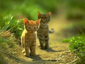 Foto Kucing Lucu Imut dan Menggemaskan 07