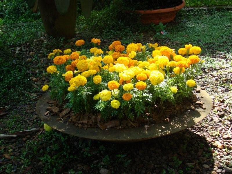 flores no jardim de deus : flores no jardim de deus:Frases e Pensamentos – Paramahansa Yogananda