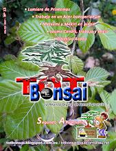 DR 13 TOT Bonsai