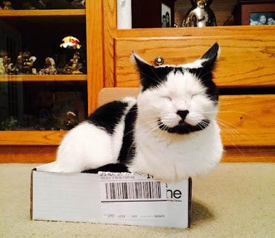 Sirius si kucing tersenyum
