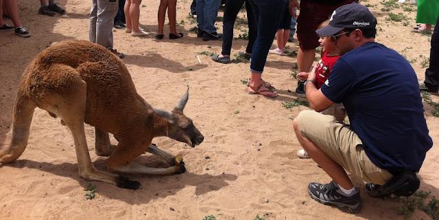 kangaroo roos n more