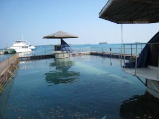 Under Water Tunnel Aquarium di Pulau Putri Island Resort Seribu Jakarta