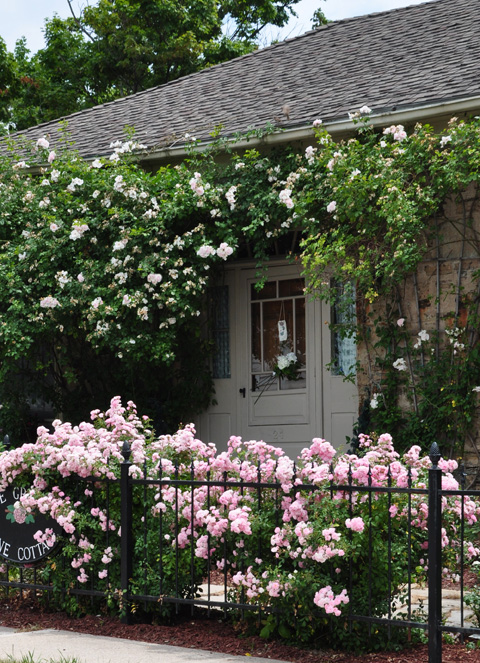 Three Dogs In A Garden A Rose Covered Cottage Waterdown