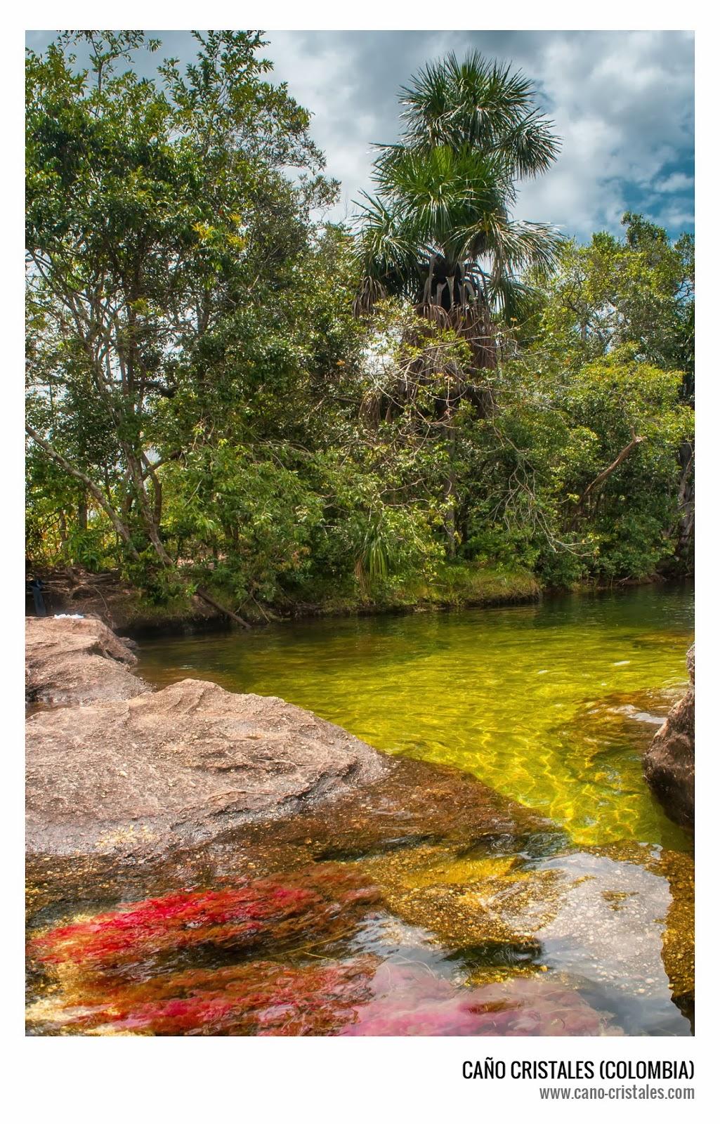 Caño Cristales, el río más hermoso del mundo