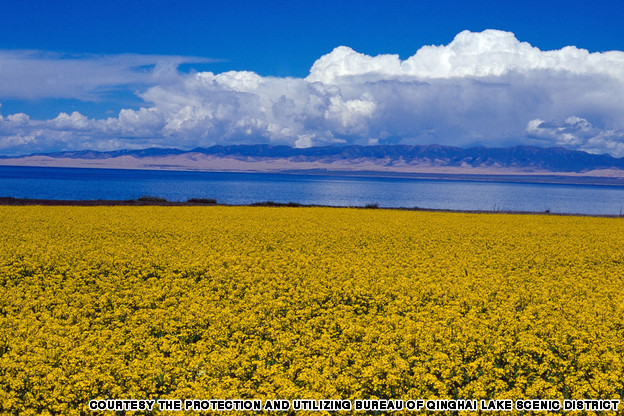 Qinghai Qinghai Lake