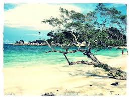 pengertian pantai dan ekosistem pantai