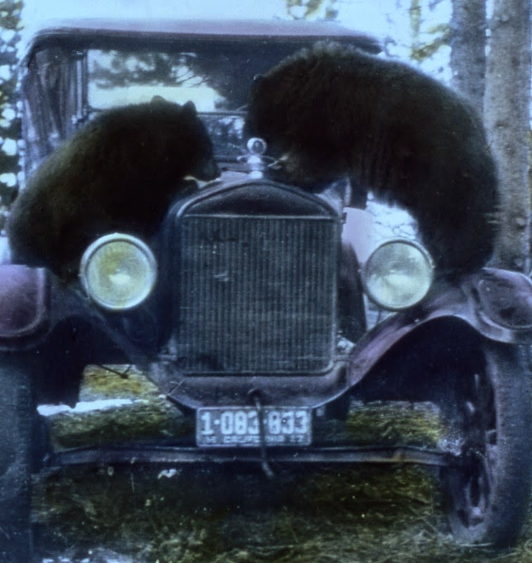 Bjørne og biler