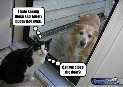 funny cute pets picture