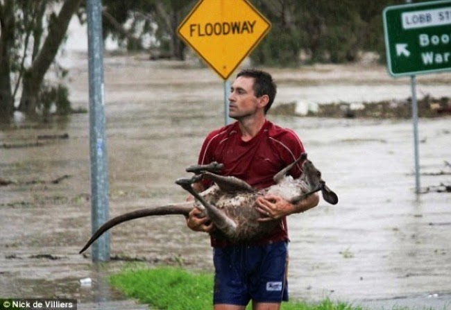#15. A brave animal lover saved this baby kangoroo's life from an unforgiving flood in Ipswich, Australia. - 24 Happy Animal Photos Made Possible By The People Who Saved Them.