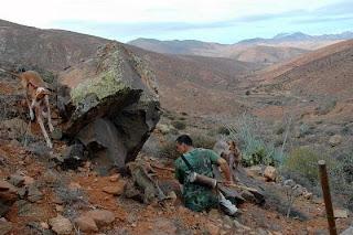 perros en fuerteventura fuente ayuntamiento de pajara