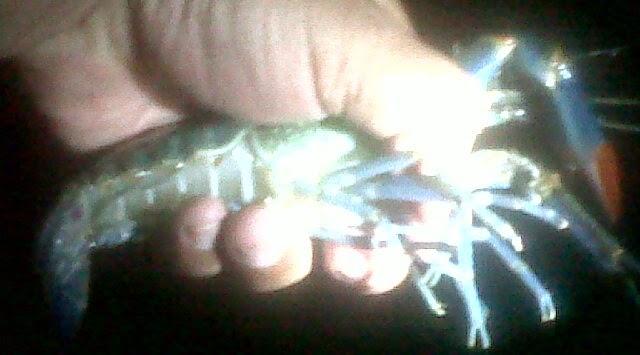 Spot Mancing Udang Galah Tanjungpinang