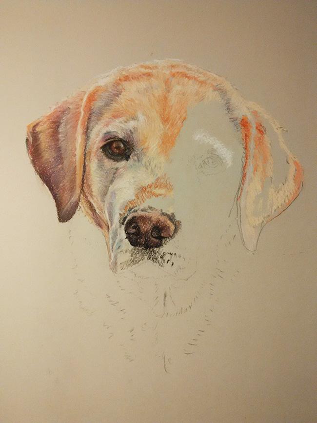 Dibujo de perro en su proceso