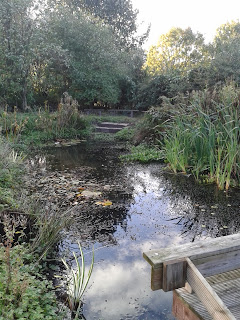 The pond today