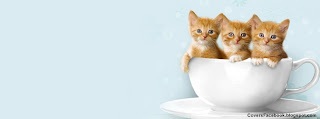 Kittens in a Cup Timeline Cover Photos