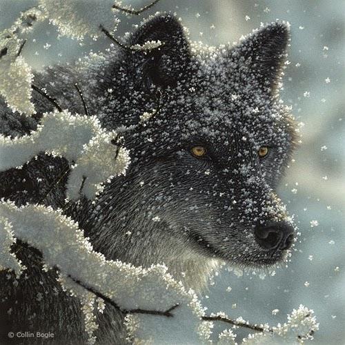 09-Black-Wolf-Collin-Bogle-Animal-Wildlife-in-Art-www-designstack-co