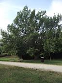 Ad oggi piantati 668 alberi