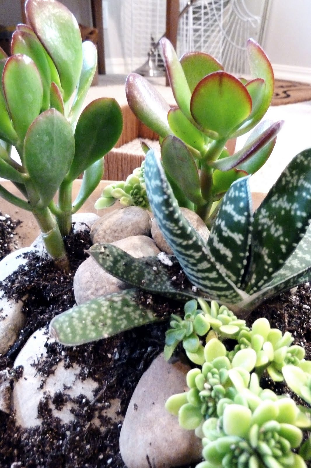 Bold Beautiful Brainy A Life Well Lived Mini Succulent