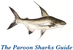 Paroon Sharks Guide
