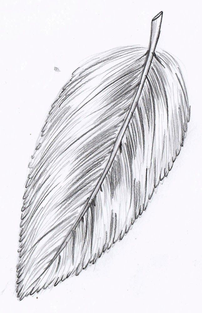 how to draw a feather for kids