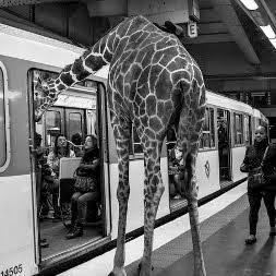 Животные в метро
