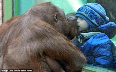 Beso orangutan a niño